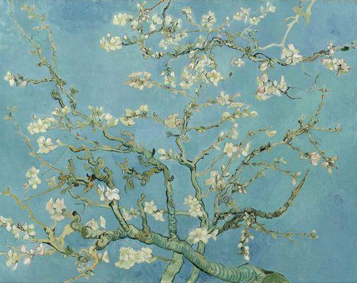 Amandier en fleurs, par Vincent Van Gogh